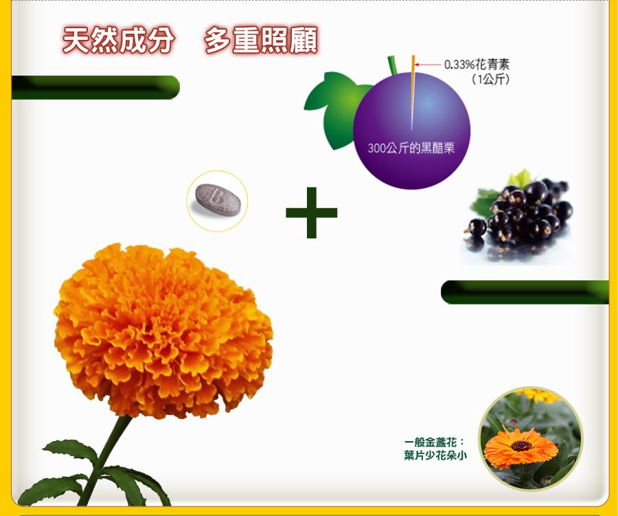 精選頂級原料葉黃素、黑醋栗